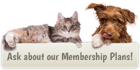 Ask about our Membership plans!